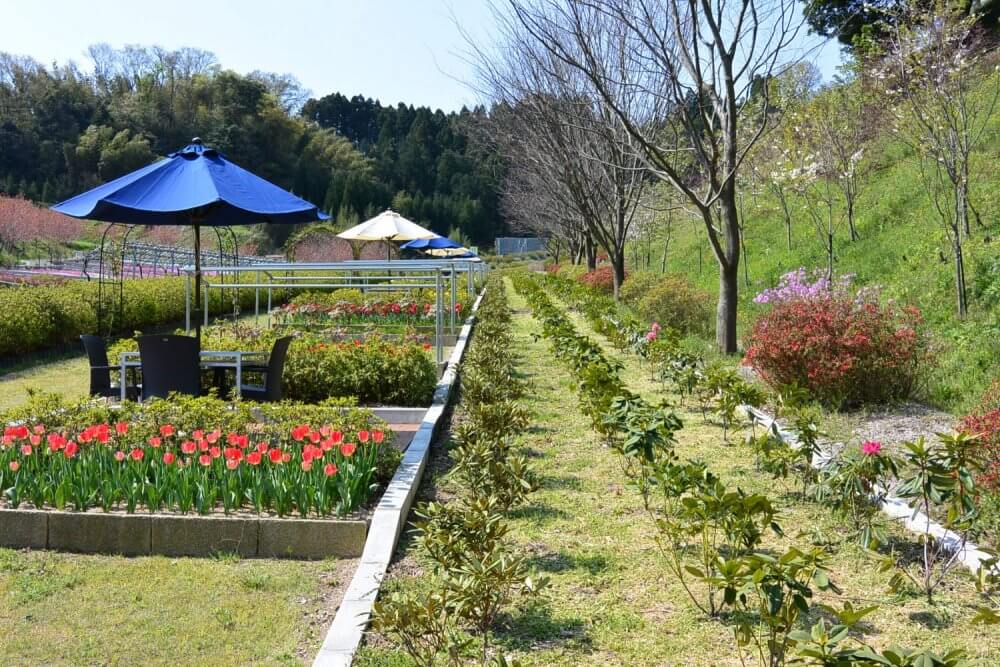 In season red tulips and a sitting area next to rows of bushes