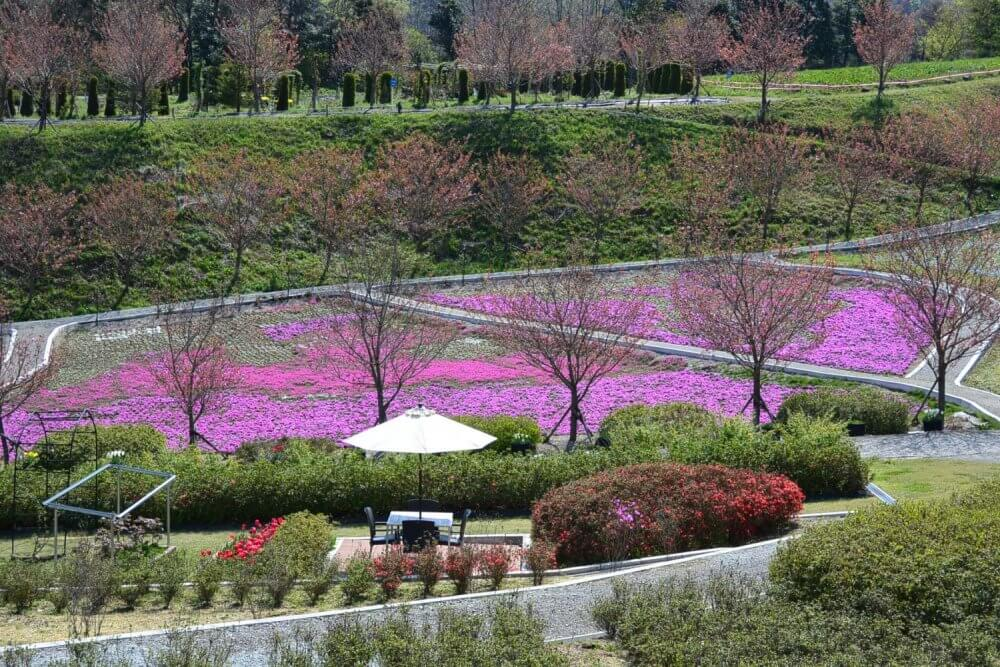 Looking down on a pink lawn and sitting area amid the flowers