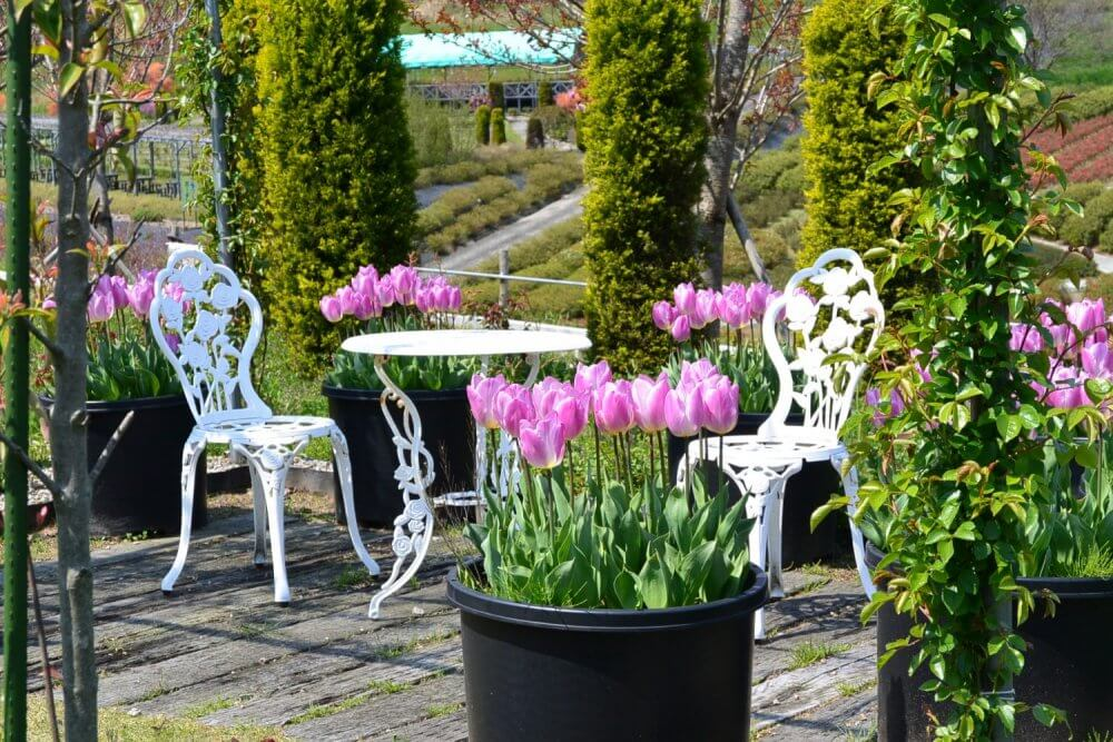 Pink tulips by some private seating